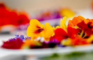 Pandemide Minyatür Sebze ve Yenilebilir Çiçeklere...