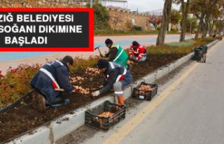 Elazığ Belediyesi, Lale Soğanı Dikimine Başladı