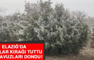 Elazığ'da Ağaçlar Kırağı Tuttu, Süs Havuzları...