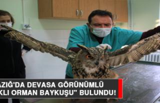 """Elazığ'da Devasa Görünümlü """"Kulaklı..."""