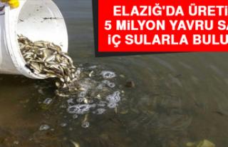 Elazığ'da Üretilen 5 Milyon Yavru Sazan İç...