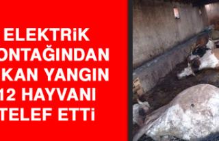 Elektrik Kontağından Çıkan Yangın, 12 Hayvanı...