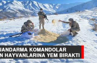 Jandarma Komandolar Yaban Hayvanlarına Yem Bıraktı