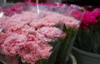 Kesme çiçekte ihracat rekoruna yaklaşıldı
