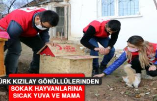 Türk Kızılay Gönüllülerinden Sokak Hayvanlarına...