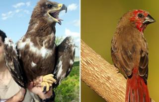 2020'de Dünyada En Çok Kuş Türünü, Bir...