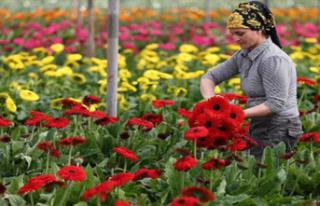 Çiçek Sektörü Geçen Yıl 83 Ülkeye İhracat...