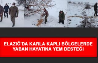 Elazığ'da Karla Kaplı Bölgelerde Yaban Hayatına...