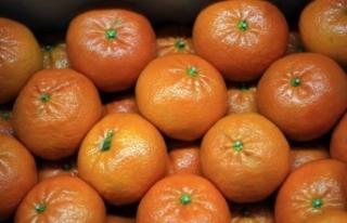 Turunçgil üretim ve ihracatını Doğu Akdeniz sırtlıyor