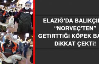 """Elazığ'da Balıkçının """"Norveç'ten""""..."""