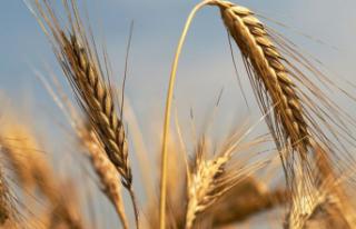Tarım Kredi 2021'de 3.7 Milyar Liralık Ürün...