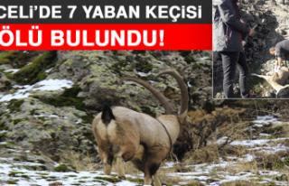 Tunceli'de 7 Yaban Keçisi Ölü Bulundu!