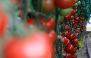 Yaş Meyve ve Sebze İhracatı Ocak Ayında 279 Milyon...