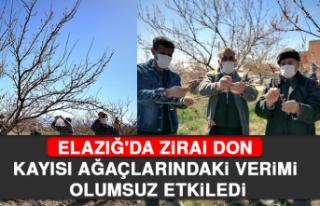 Elazığ'da Zirai Don Kayısı Ağaçlarındaki...