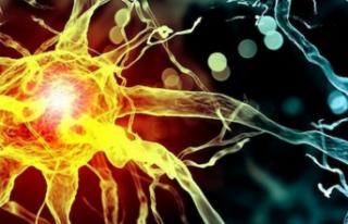 İnsan Beyninde, Ölümden Sonra Harekete Geçen Genler...