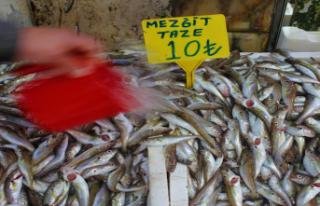 Mezgit 10 Liralık Fiyatıyla Samsun'da Balık...