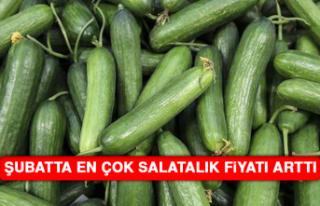 Şubatta En Çok Salatalık Fiyatı Arttı