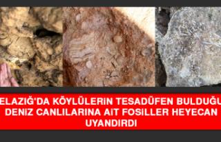 Elazığ'da Köylülerin Tesadüfen Bulduğu...