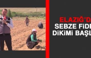 Elazığ'da Sebze Fidesi Dikimi Başladı