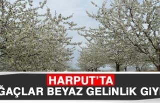 Harput'ta Ağaçlar Beyaz Gelinlik Giydi