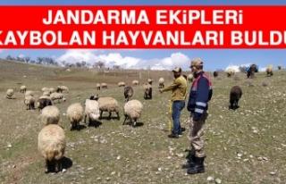 Jandarma Ekipleri Kaybolan Hayvanları Buldu