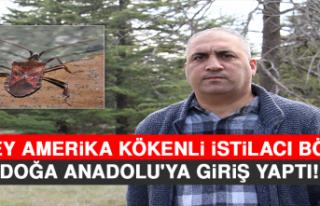Kuzey Amerika Kökenli İstilacı Böcek, Doğa Anadolu'ya...