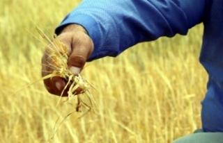Çiftçinin kuraklık endişesi sürüyor