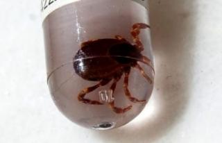 Doğaya Çıkacaklara Uyarı: Koronavirüsten Daha...