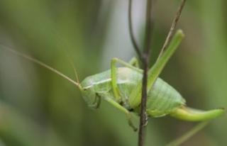 Doğaseverler ODTÜ'de bitki ve hayvan türlerini...