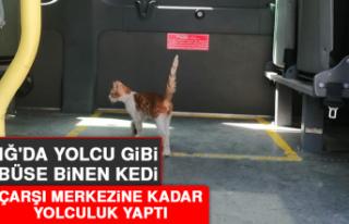Elazığ'da Yolcu Gibi Minibüse Binen Kedi,...