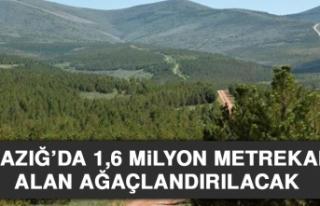Elazığ'da 1,6 Milyon Metrekare Alan Ağaçlandırılacak