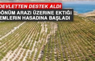 Elazığ'ın Ağın İlçesinde Başlayan Badem...