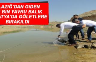 Elazığ'dan Giden 120 Bin Yavru Balık Malatya'da...