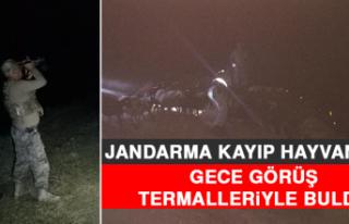 Jandarma Kayıp Hayvanları Gece Görüş Termalleriyle...
