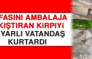 Kafasını Ambalaja Sıkıştıran Kirpiyi Duyarlı...