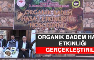 Organik Badem Hasatı Etkinliği Gerçekleştirildi