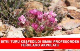 Yeni Bitki Türü Keşfedildi İsmini Profesörden...
