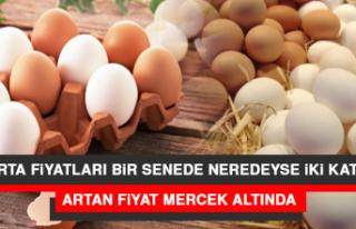 Yumurta Fiyatları Bir Senede Neredeyse İki Kat Arttı:...