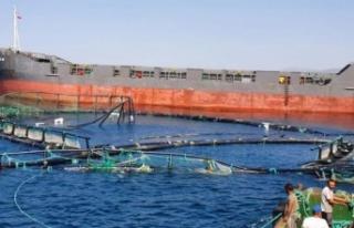 Çiftlik havuzundaki 20 milyon liralık balık denize...