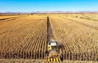 Diyarbakır'da mısırdan 400 bin ton rekolte...