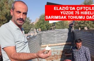 Elazığ'da Çiftçilere Yüzde 75 Hibeli Sarımsak...
