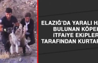 Elazığ'da Yaralı Halde Bulunan Köpek İtfaiye...