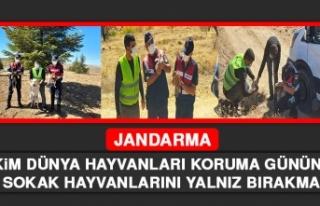 Jandarma 4 Ekim Dünya Hayvanları Koruma Gününde...