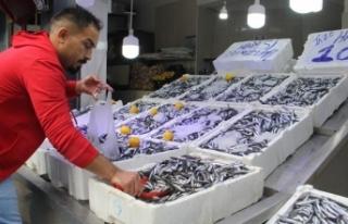 Karadeniz'de hamsi bolluğu: Fiyatı 10 liraya...