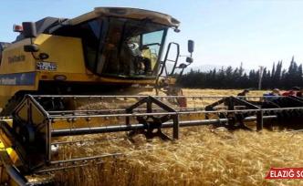 Buğdaydaki Rekolte Artışı Üreticiye Çifte Bayram Yaşatıyor