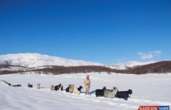 Tunceli'de besiciler çetin kış koşullarıyla mücadele ediyor