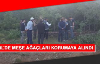 Baskil'de Meşe Ağaçları Korumaya Alındı