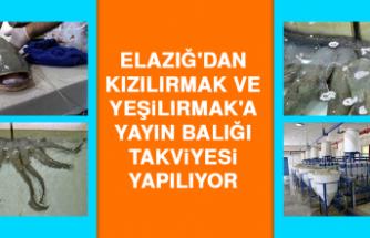 Elazığ'dan Kızılırmak ve Yeşilırmak'a Yayın Balığı Takviyesi Yapılıyor