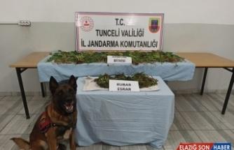 Tunceli'de bin 200 kök Hint keneviri ele geçirildi