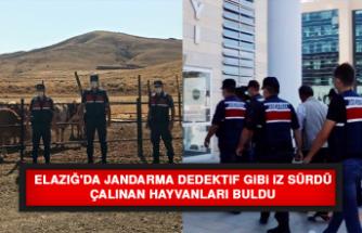 Elazığ'da Jandarma Dedektif Gibi İz Sürdü, Çalınan Hayvanları Buldu